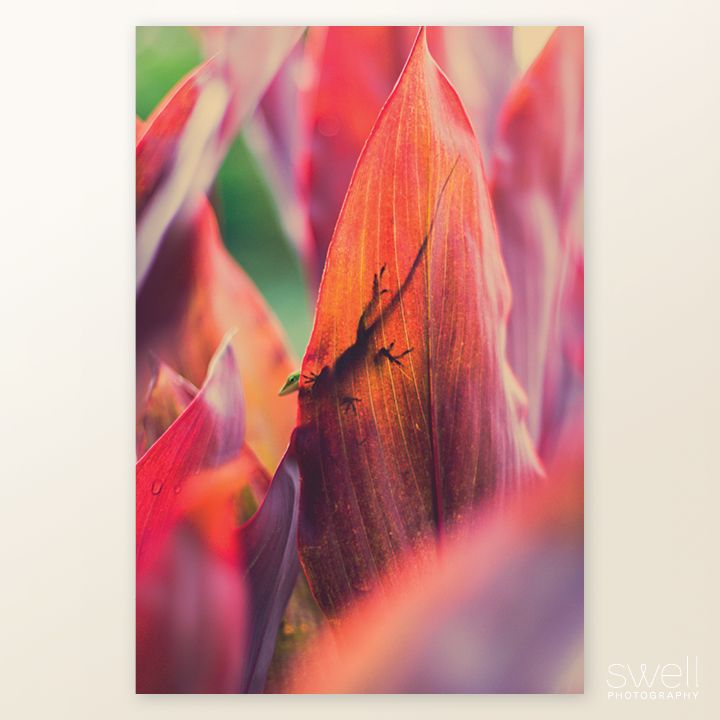 Kauai Lizard on a Ti Leaf Photo Art