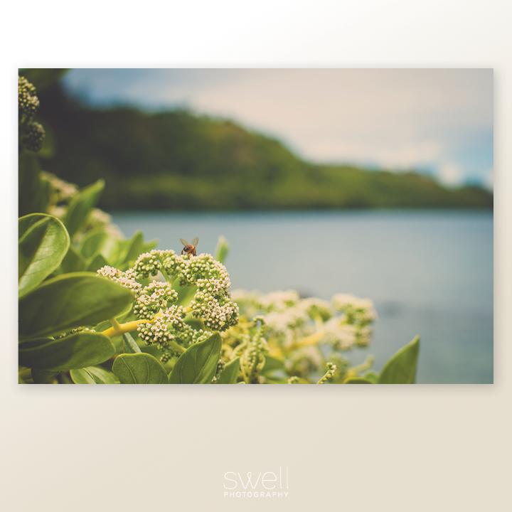 anini bee photography print