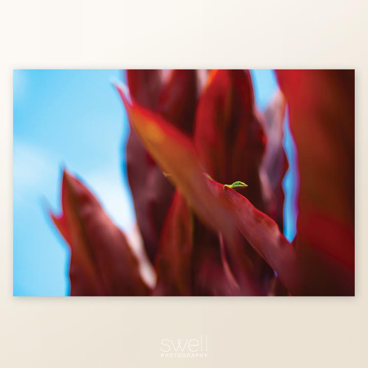 botanical print kauai lizard