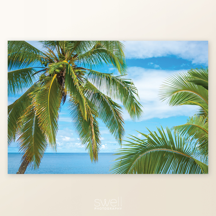 kauai art palm tree photography