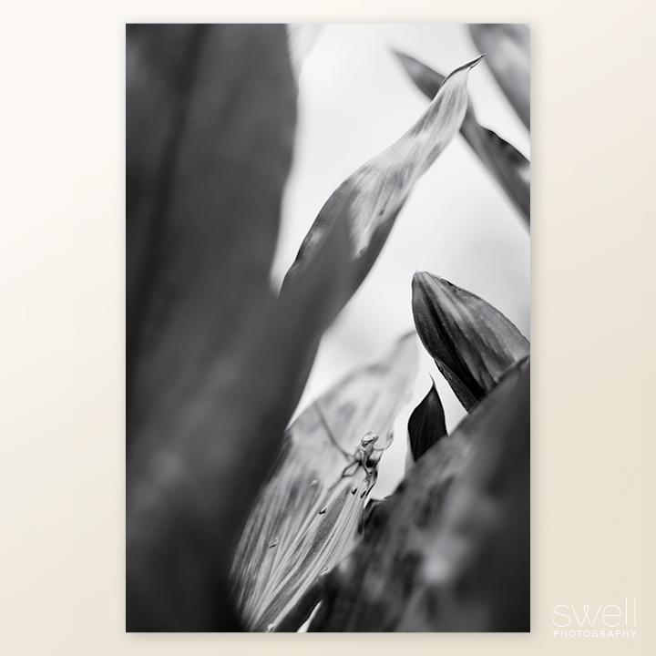 kauai botanical print lizard black and white